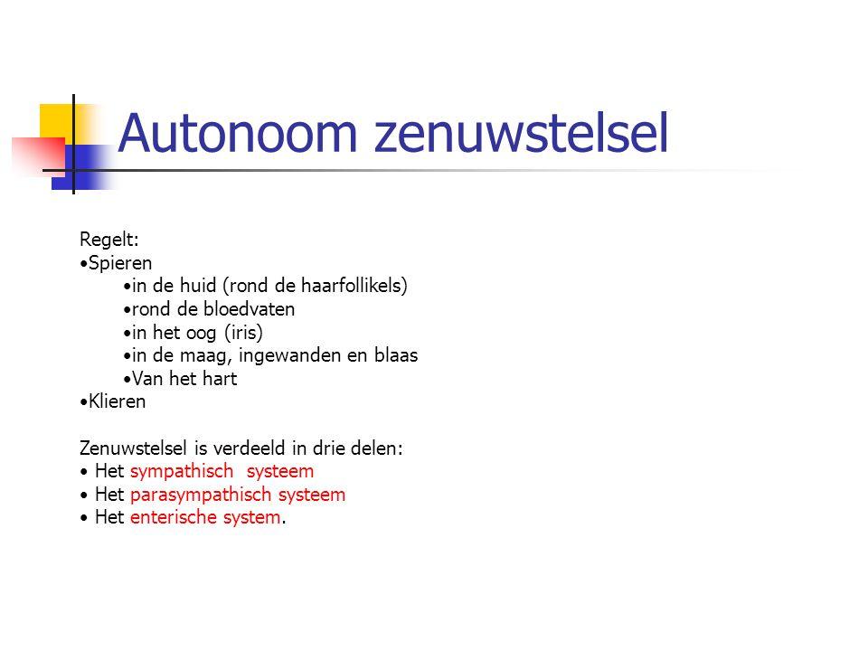 Autonoom zenuwstelsel