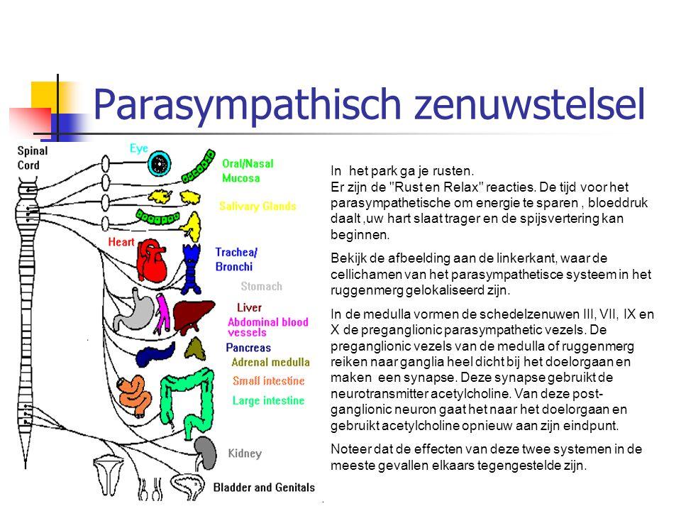 Parasympathisch zenuwstelsel