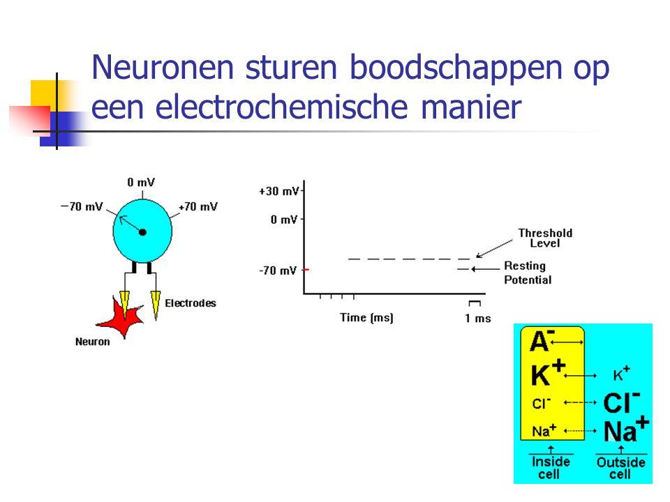 Neuronen sturen boodschappen op een electrochemische manier
