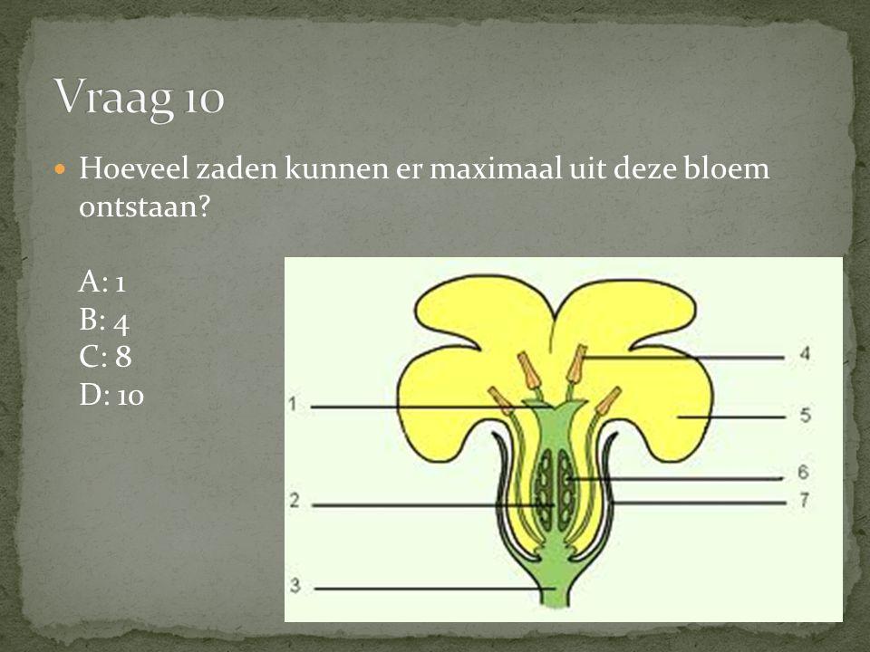 Vraag 10 Hoeveel zaden kunnen er maximaal uit deze bloem ontstaan A: 1 B: 4 C: 8 D: 10 c