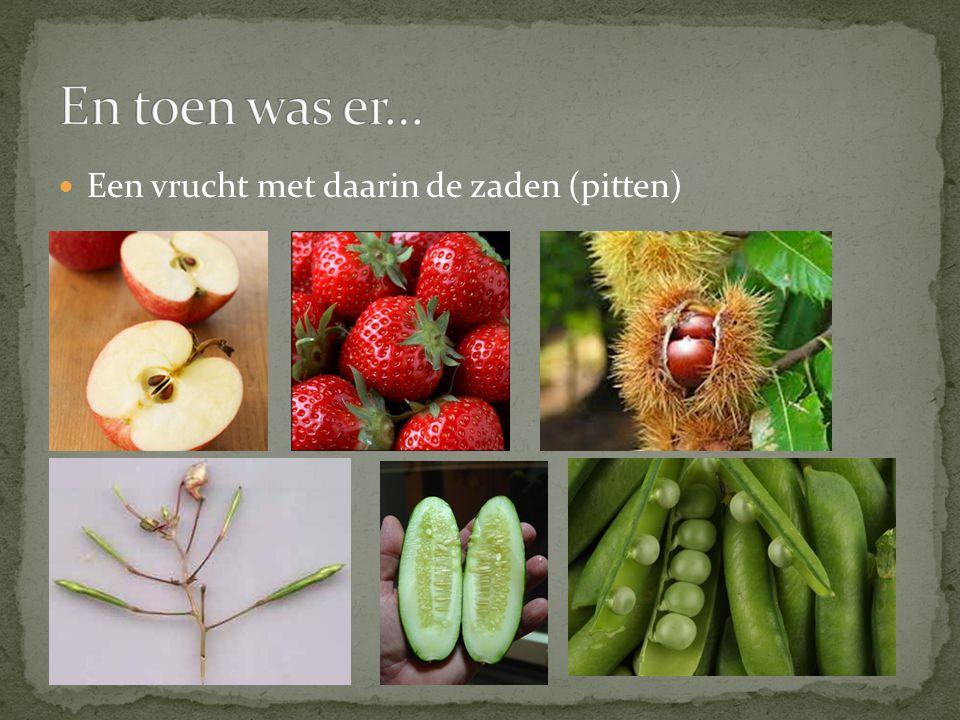 En toen was er… Een vrucht met daarin de zaden (pitten)