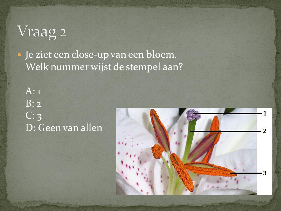 Vraag 2 Je ziet een close-up van een bloem. Welk nummer wijst de stempel aan A: 1 B: 2 C: 3 D: Geen van allen.