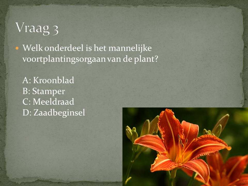 Vraag 3 Welk onderdeel is het mannelijke voortplantingsorgaan van de plant A: Kroonblad B: Stamper C: Meeldraad D: Zaadbeginsel.