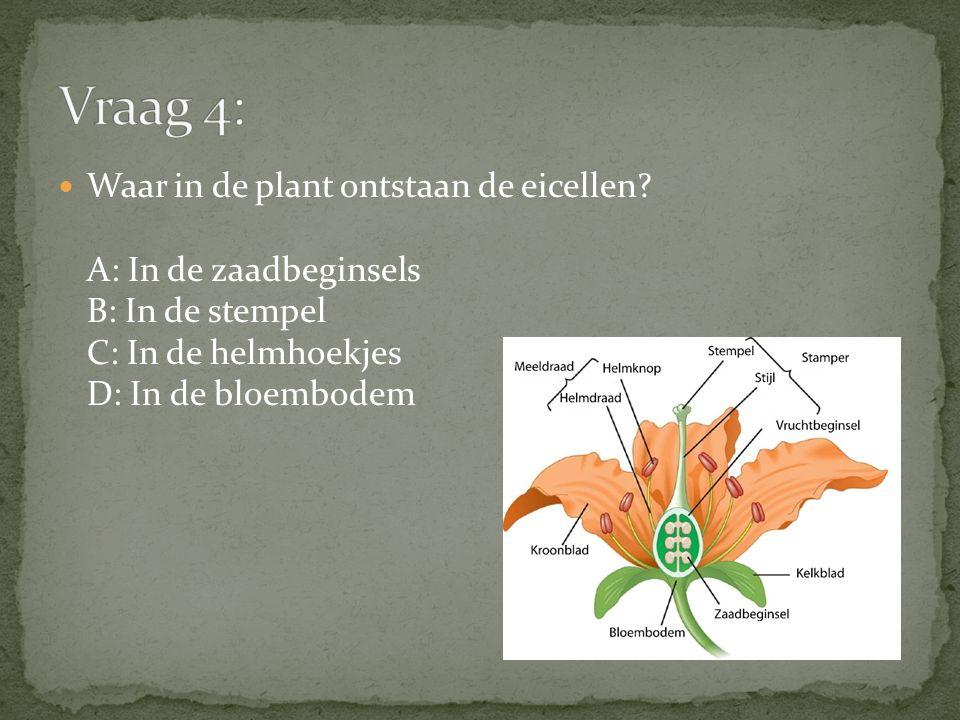 Vraag 4: Waar in de plant ontstaan de eicellen A: In de zaadbeginsels B: In de stempel C: In de helmhoekjes D: In de bloembodem.