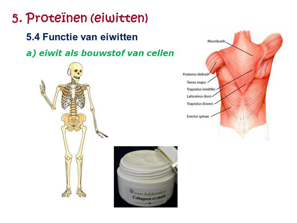 5. Proteïnen (eiwitten) 5.4 Functie van eiwitten