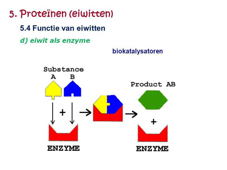 5. Proteïnen (eiwitten) 5.4 Functie van eiwitten d) eiwit als enzyme