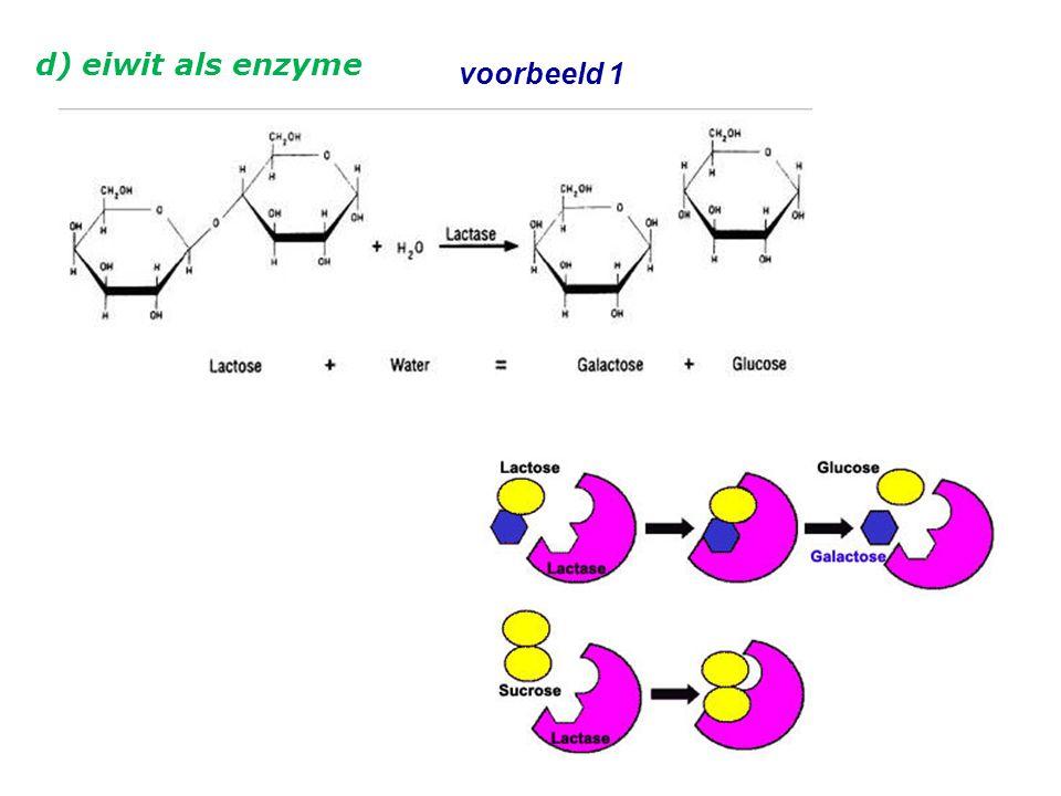 d) eiwit als enzyme voorbeeld 1