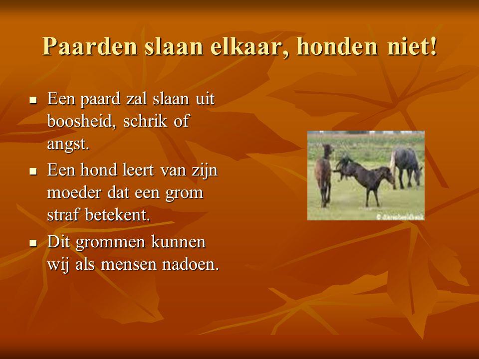 Paarden slaan elkaar, honden niet!
