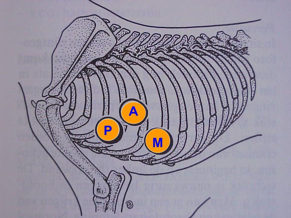 A P M