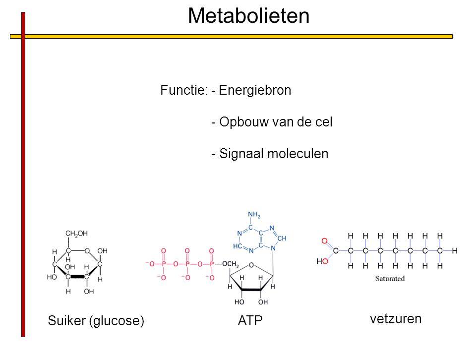 Metabolieten Functie: - Energiebron - Opbouw van de cel