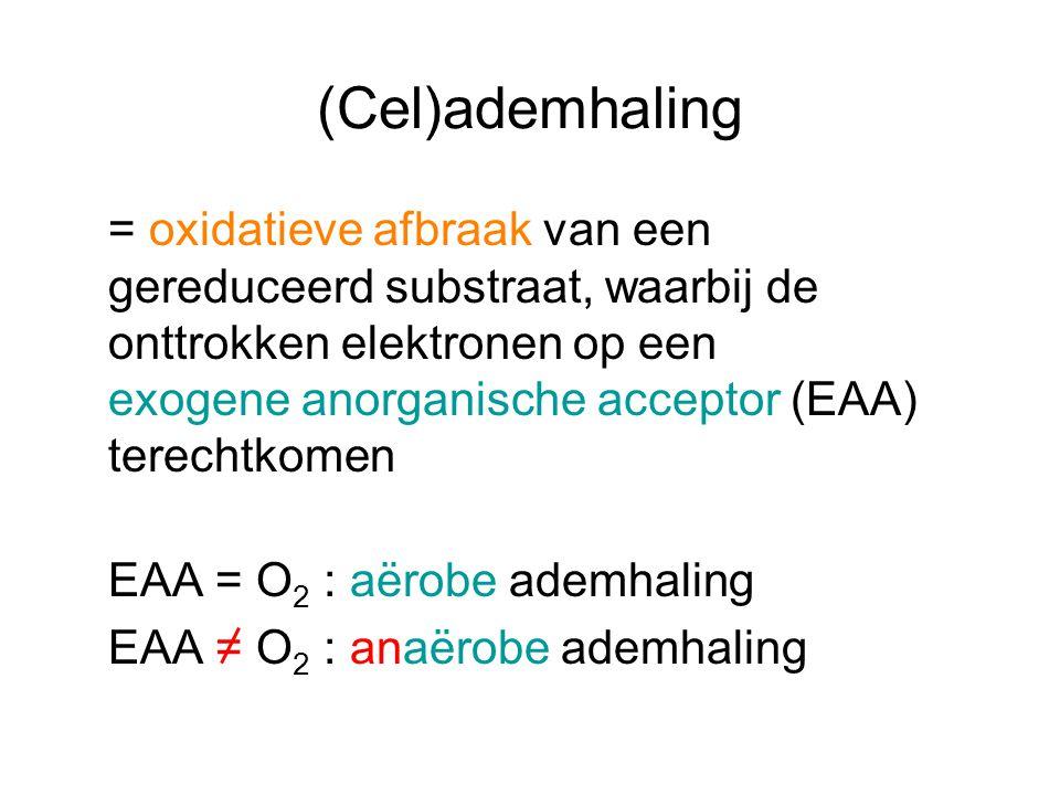 (Cel)ademhaling