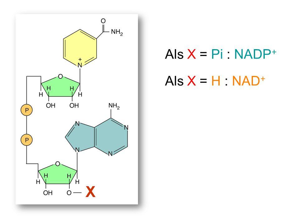 Als X = Pi : NADP+ Als X = H : NAD+