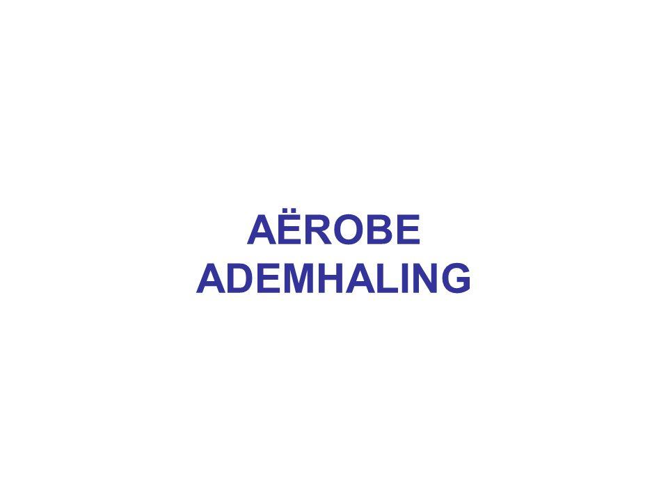 AËROBE ADEMHALING