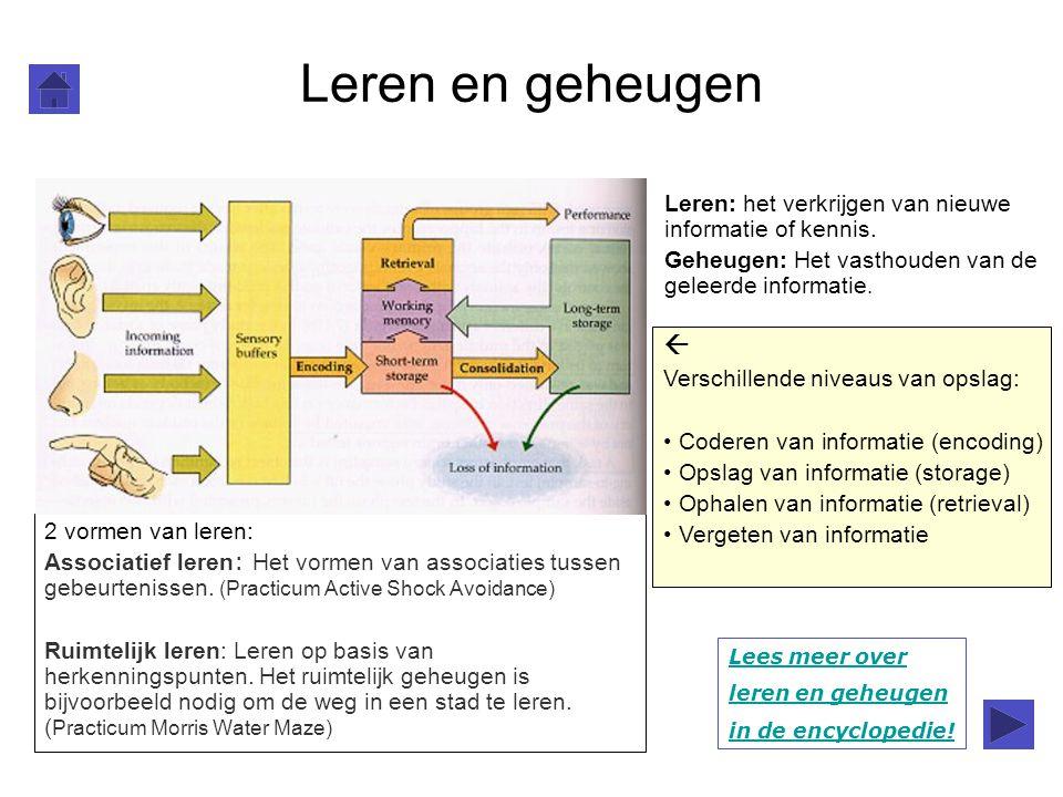 Leren en geheugen Leren: het verkrijgen van nieuwe informatie of kennis. Geheugen: Het vasthouden van de geleerde informatie.