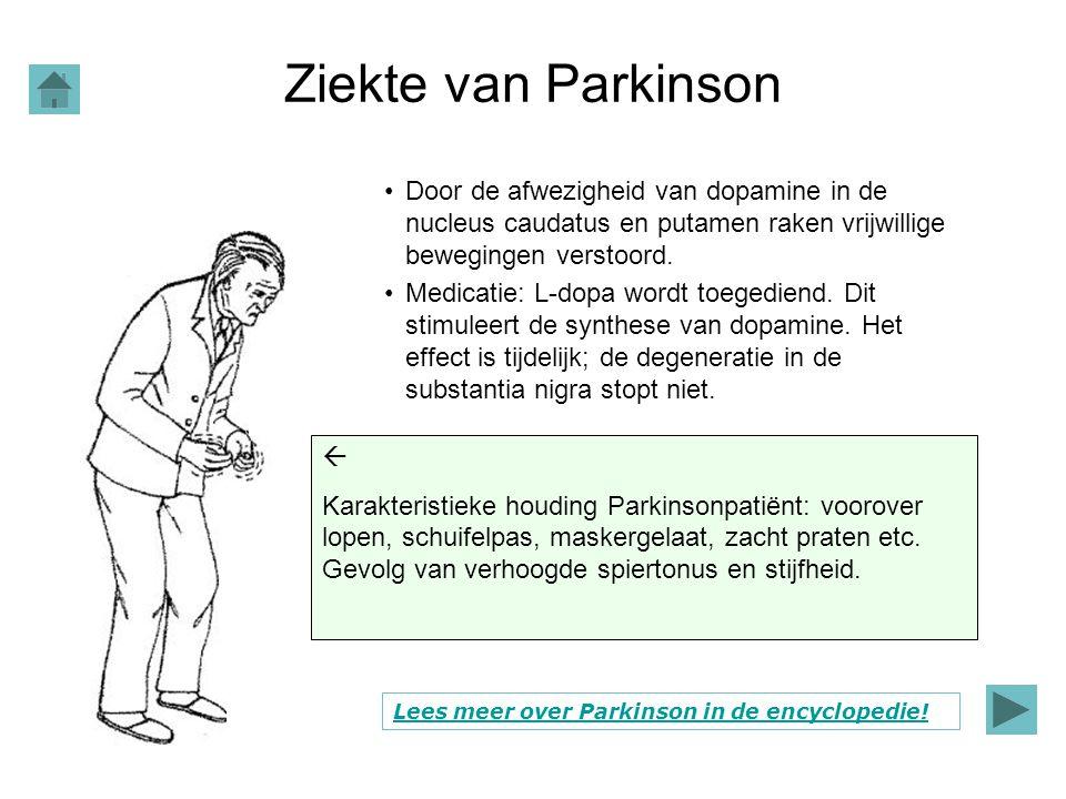 Ziekte van Parkinson Door de afwezigheid van dopamine in de nucleus caudatus en putamen raken vrijwillige bewegingen verstoord.