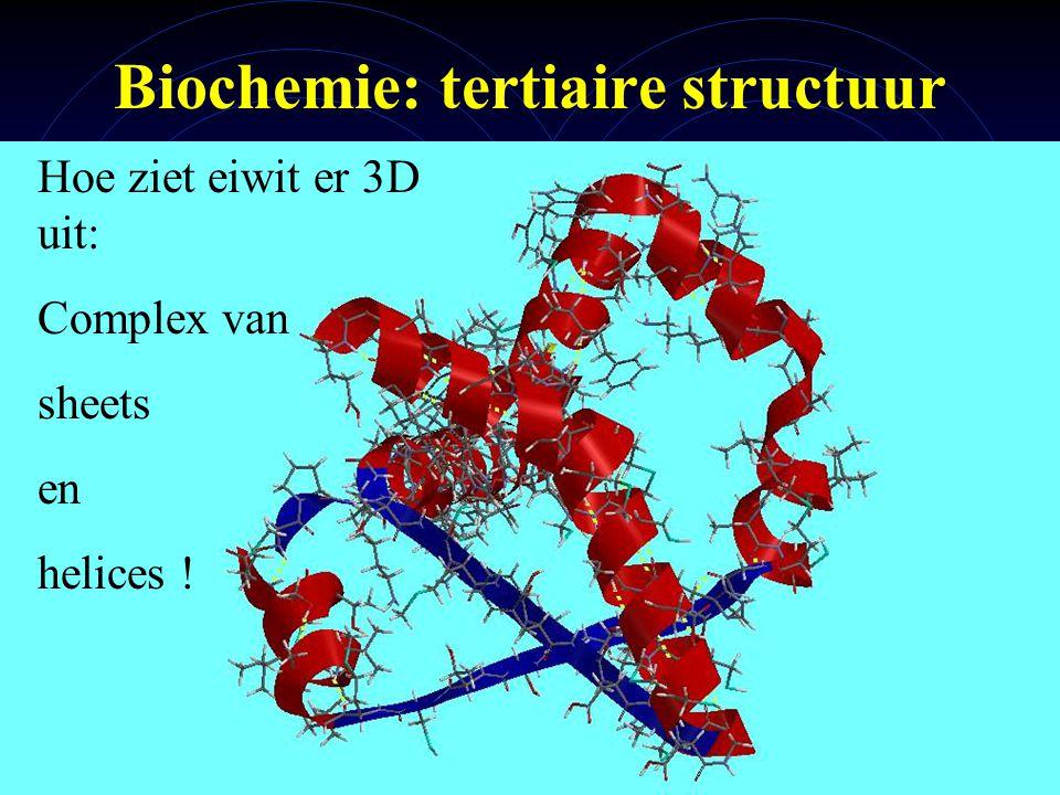 Biochemie: tertiaire structuur
