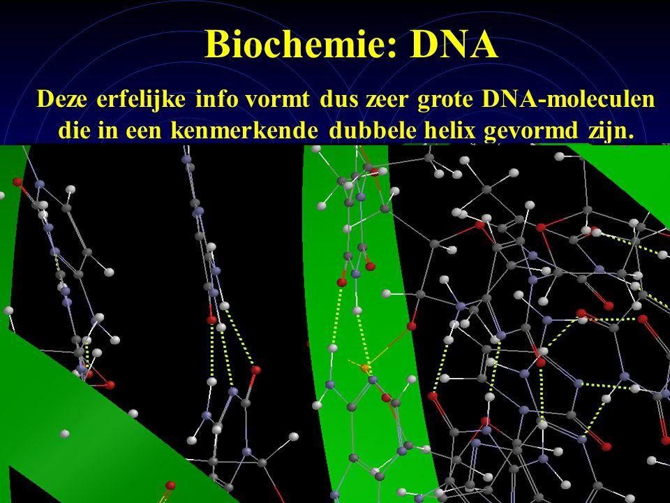 Biochemie: DNA Deze erfelijke info vormt dus zeer grote DNA-moleculen die in een kenmerkende dubbele helix gevormd zijn.