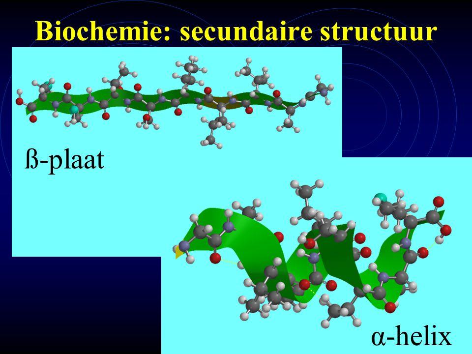 Biochemie: secundaire structuur