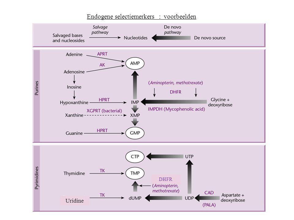 Endogene selectiemerkers : voorbeelden