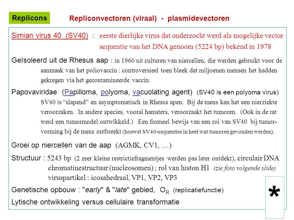 Repliconvectoren (viraal) - plasmidevectoren