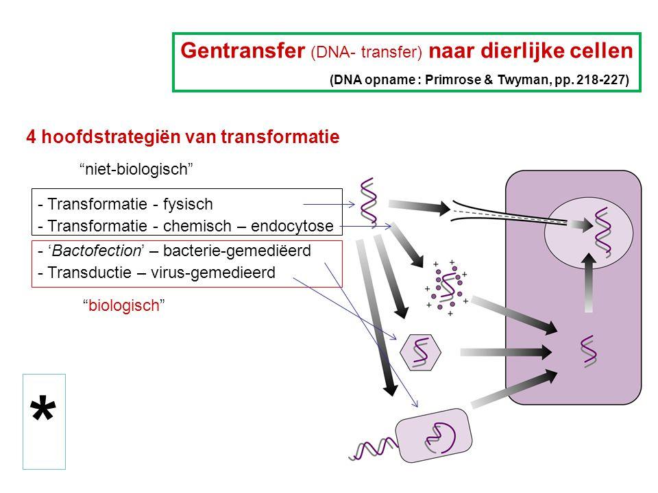 * Gentransfer (DNA- transfer) naar dierlijke cellen