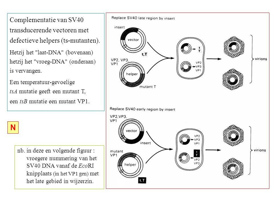 N Complementatie van SV40 transducerende vectoren met
