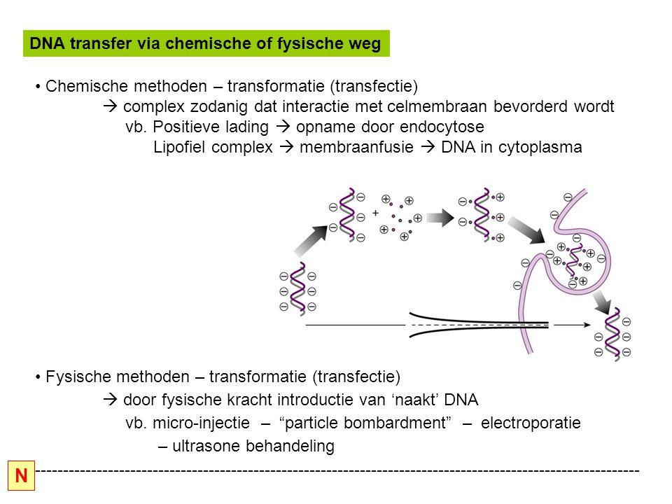 N DNA transfer via chemische of fysische weg