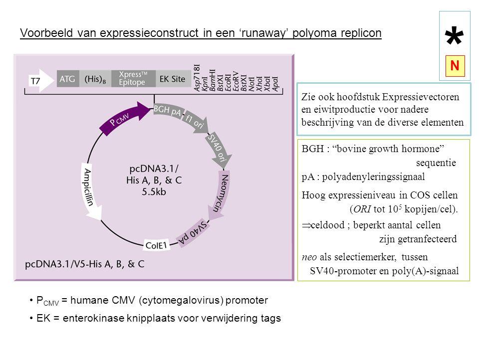 Voorbeeld van expressieconstruct in een 'runaway' polyoma replicon