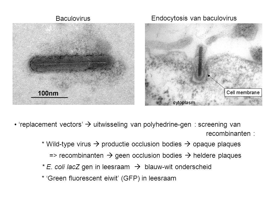 Baculovirus Endocytosis van baculovirus. 'replacement vectors'  uitwisseling van polyhedrine-gen : screening van.