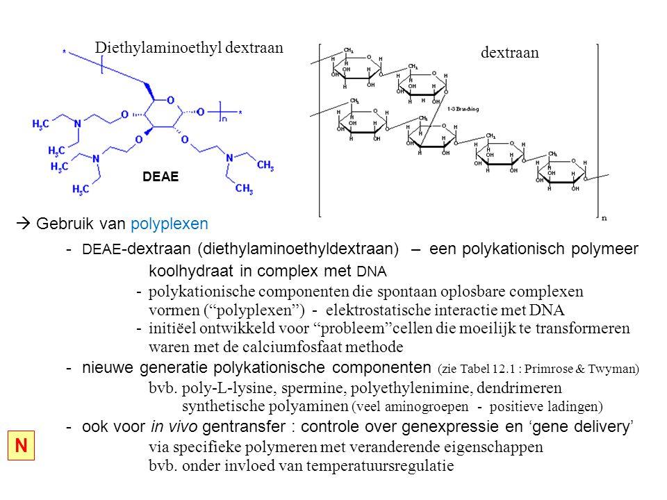 N Diethylaminoethyl dextraan dextraan  Gebruik van polyplexen
