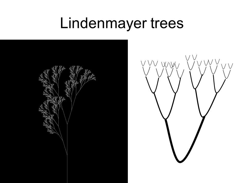 Lindenmayer trees