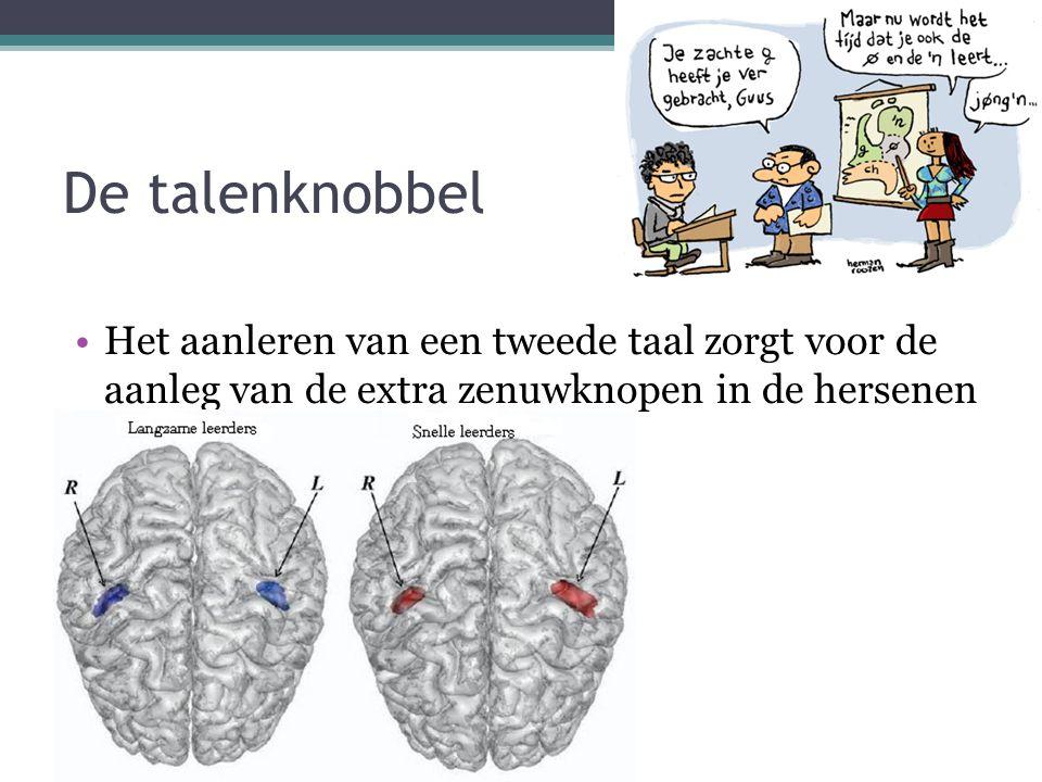 De talenknobbel Het aanleren van een tweede taal zorgt voor de aanleg van de extra zenuwknopen in de hersenen.