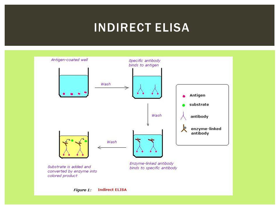 Indirect ELISA