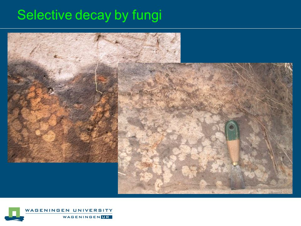 Selective decay by fungi