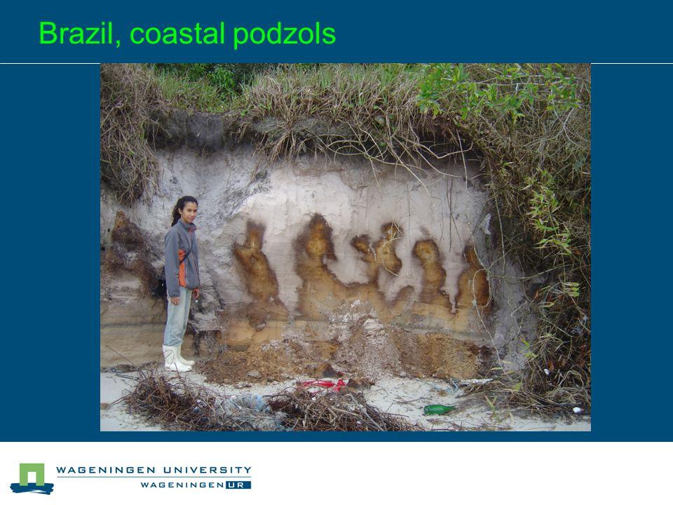 Brazil, coastal podzols
