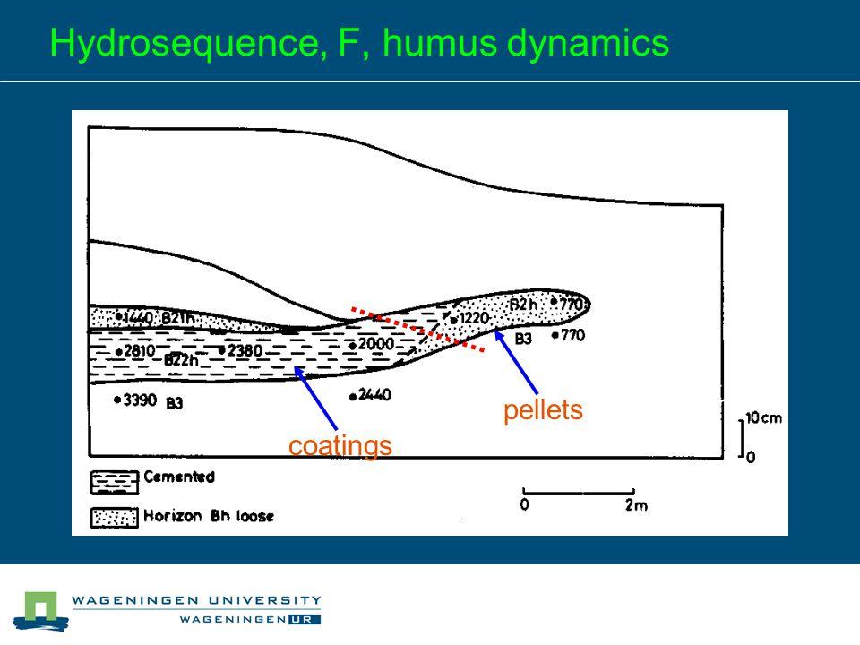 Hydrosequence, F, humus dynamics