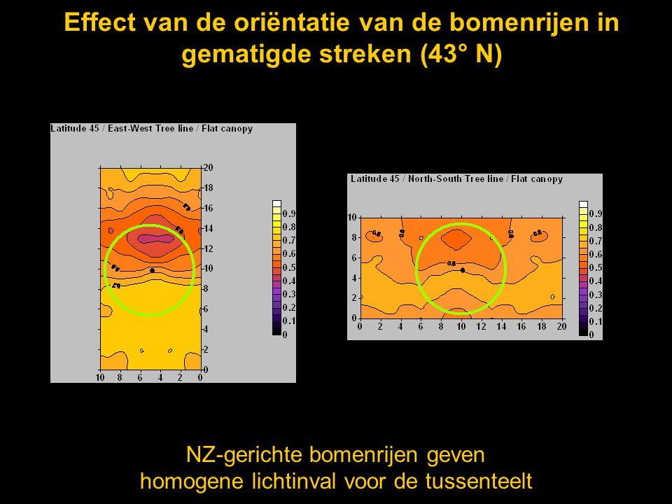 Effect van de oriëntatie van de bomenrijen in gematigde streken (43° N)