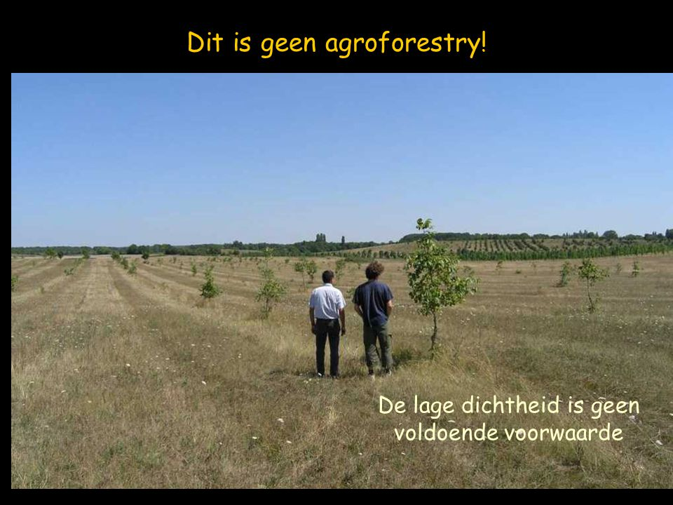 Dit is geen agroforestry!