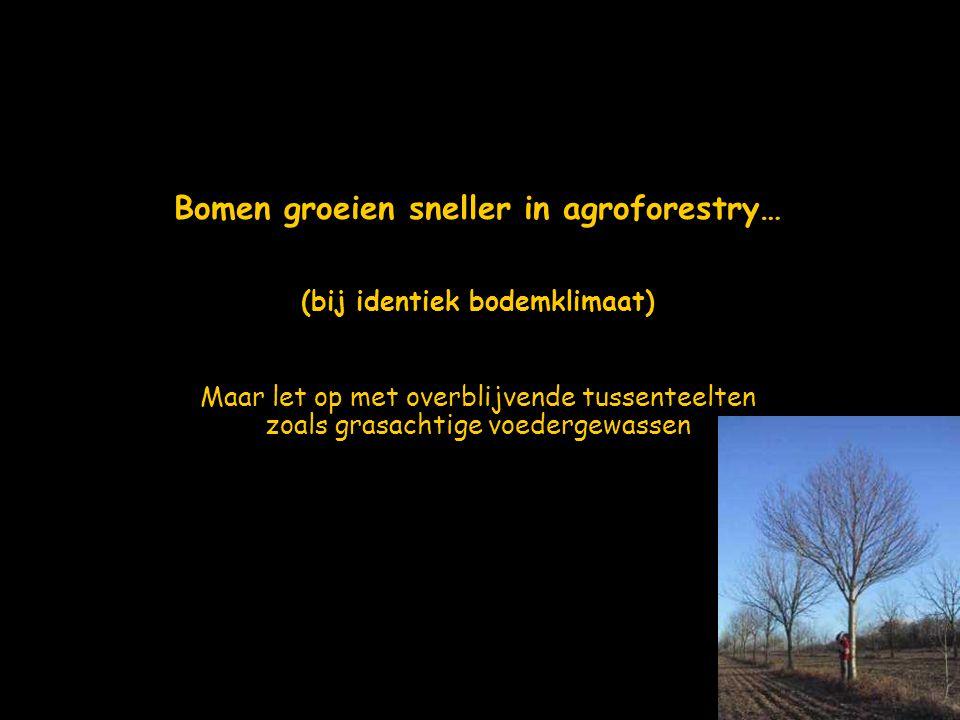 Bomen groeien sneller in agroforestry… (bij identiek bodemklimaat)