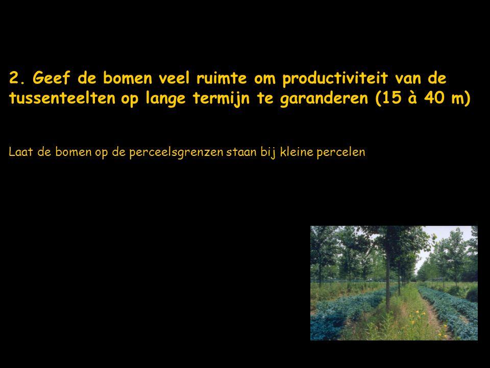 2. Geef de bomen veel ruimte om productiviteit van de tussenteelten op lange termijn te garanderen (15 à 40 m)