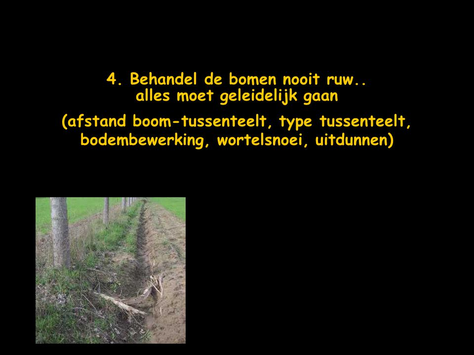 4. Behandel de bomen nooit ruw.. alles moet geleidelijk gaan