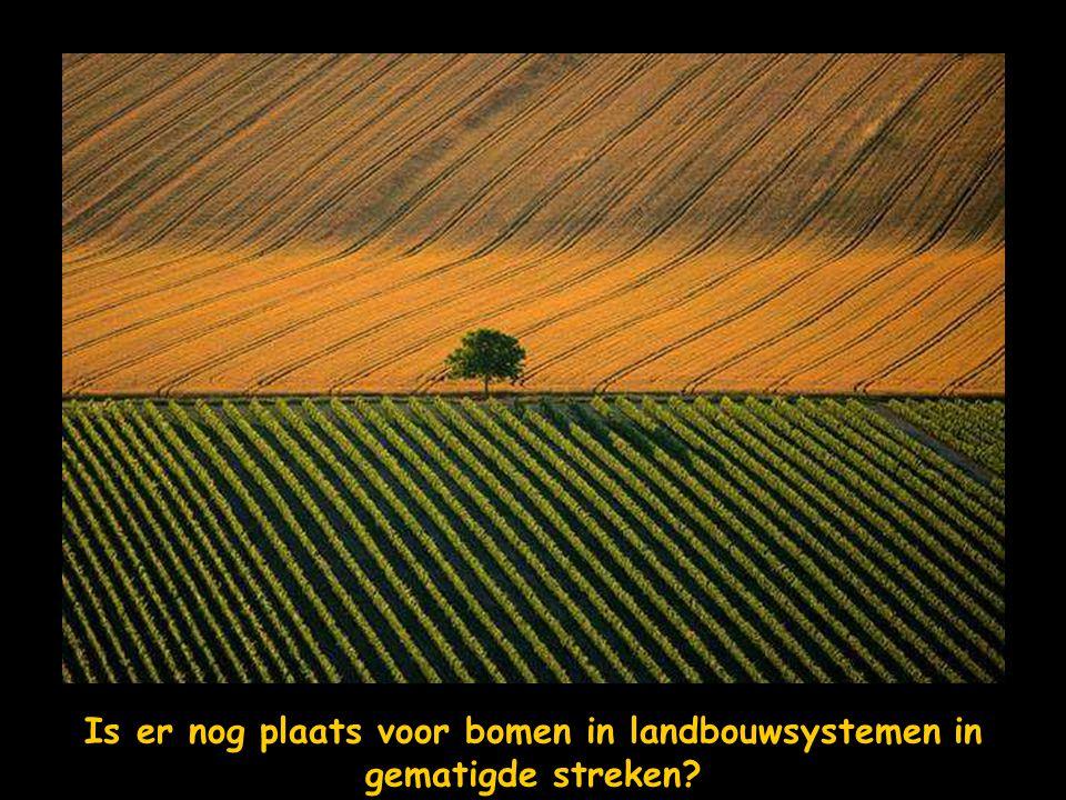 Is er nog plaats voor bomen in landbouwsystemen in gematigde streken