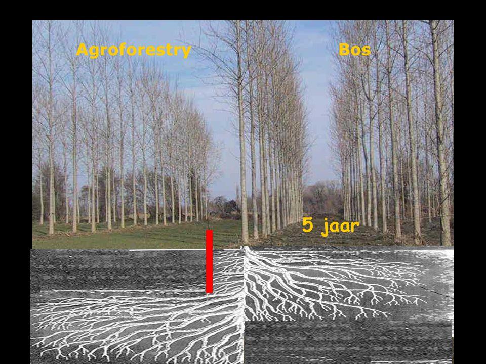 Agroforestry Bos 5 jaar