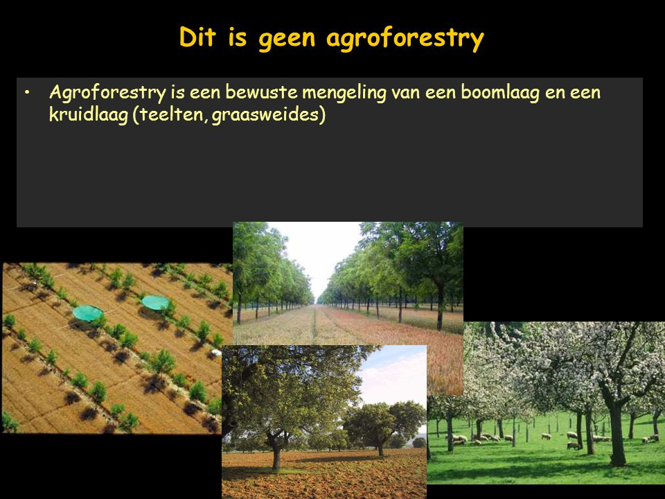 Dit is geen agroforestry