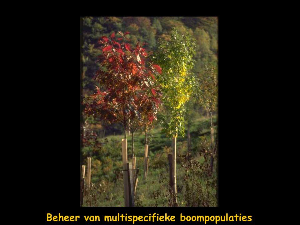Beheer van multispecifieke boompopulaties