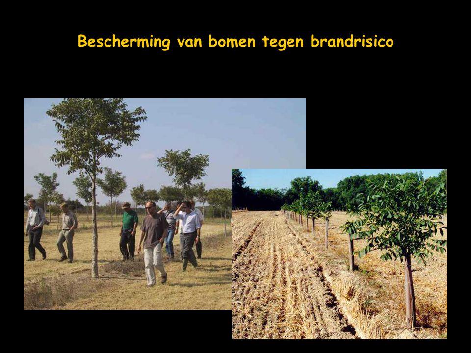 Bescherming van bomen tegen brandrisico