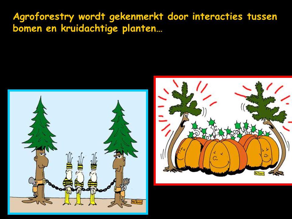Agroforestry wordt gekenmerkt door interacties tussen bomen en kruidachtige planten…