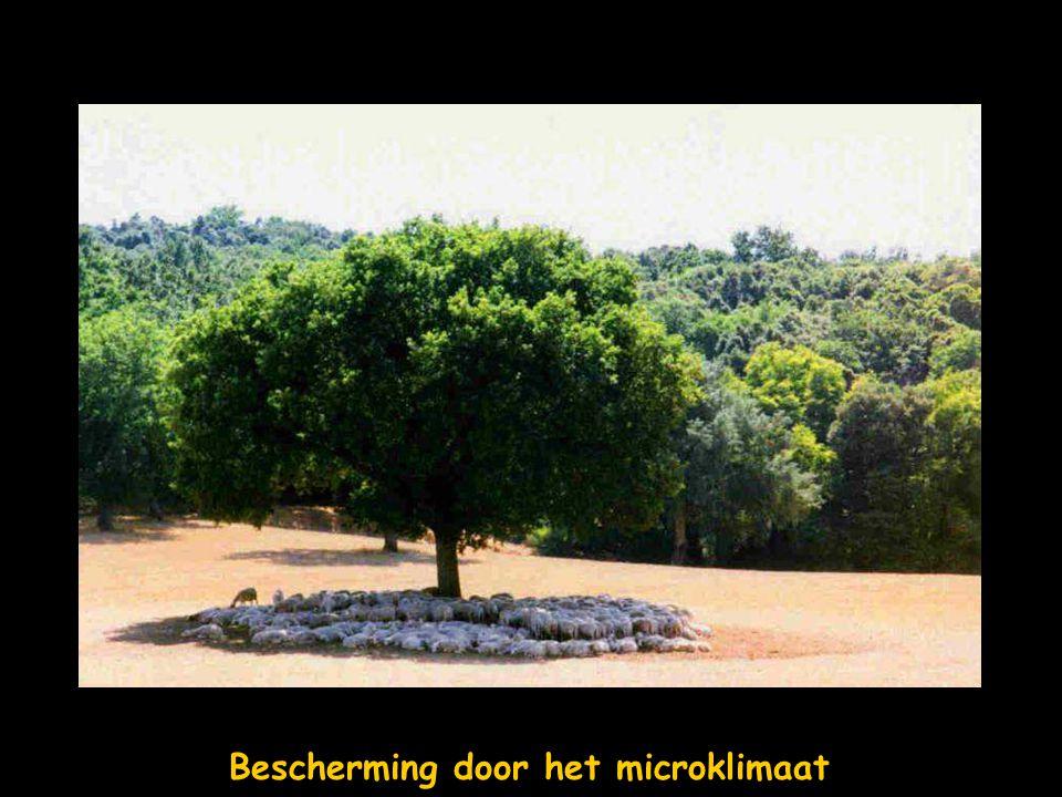 Bescherming door het microklimaat