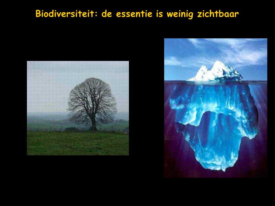 Biodiversiteit: de essentie is weinig zichtbaar