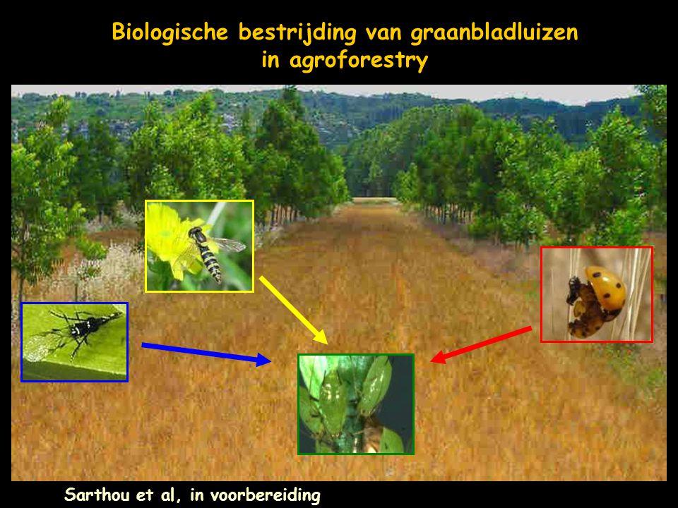 Biologische bestrijding van graanbladluizen in agroforestry